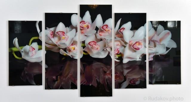 Орхидея модульная фотография