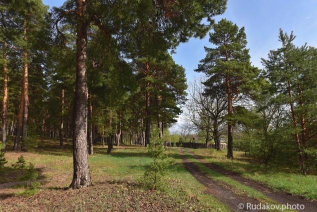 Дорога в Ореховку