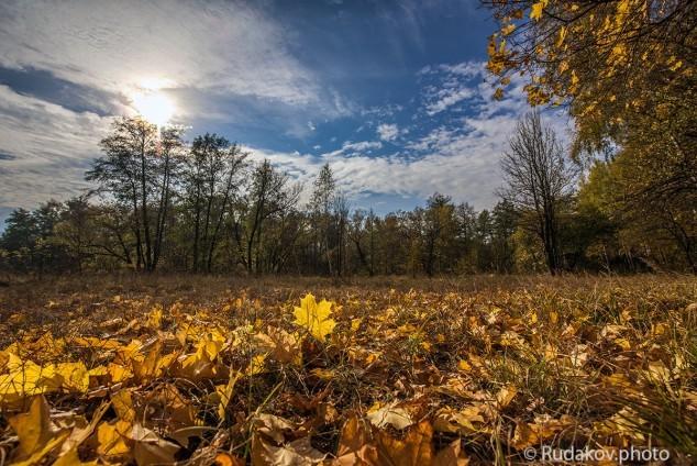 Прощаясь с осенью