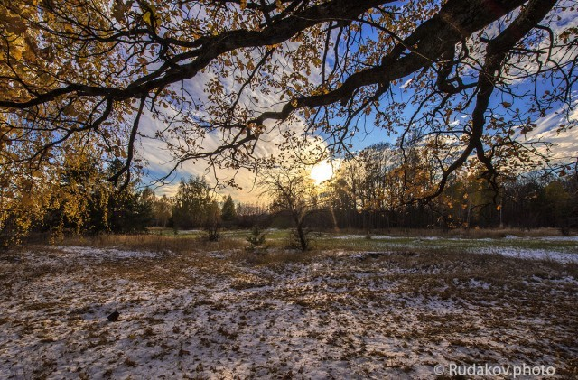 Под ветвями осеннего дуба