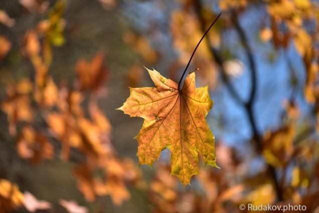 Осенняя карусель