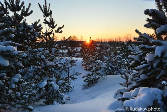 Закат с елками