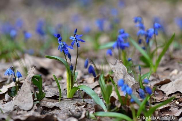 В апрельском лесу