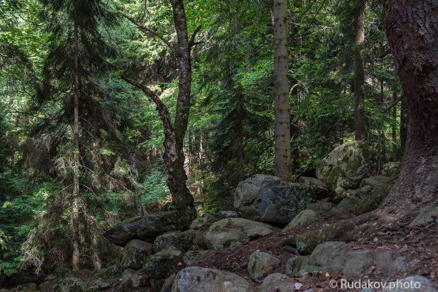 В Тебердинском лесу