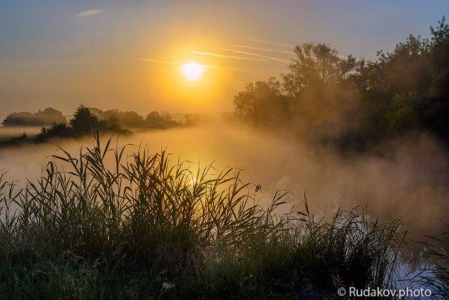 Утро в Троицкой дубраве