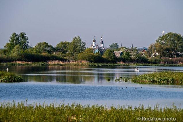 Белые лебеди на Бокинском пруду