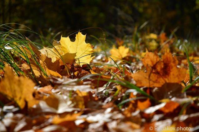 Средь листьев опавших