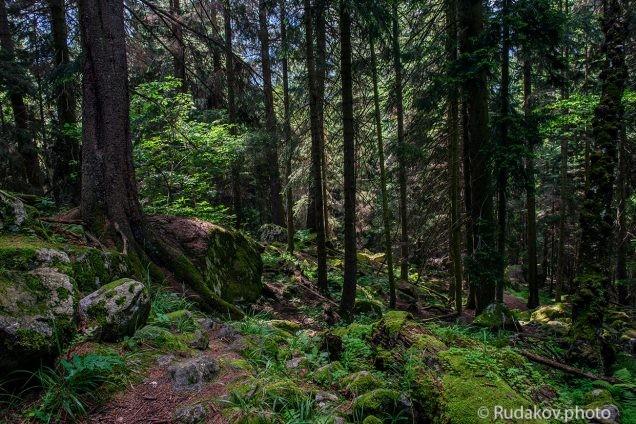 Сказочный лес Теберды