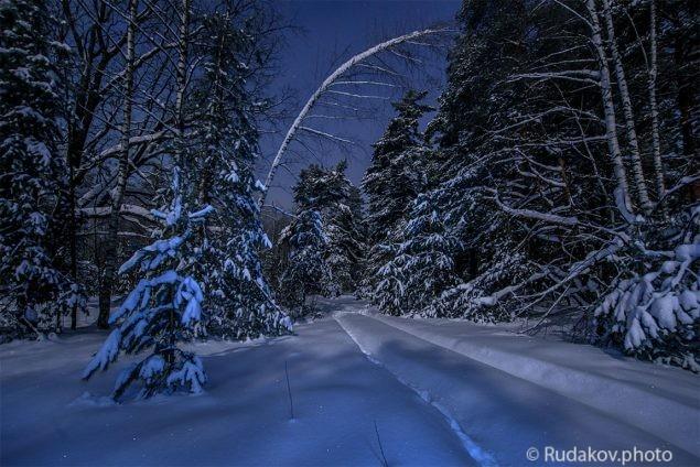 В сказочном ночном лесу