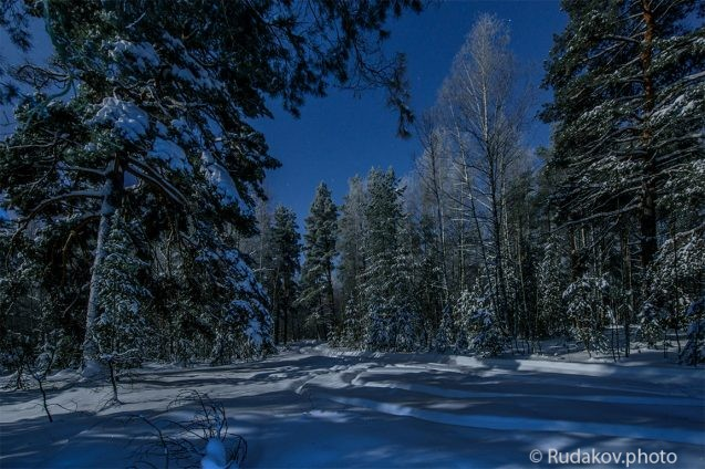 Ночной зимний лес
