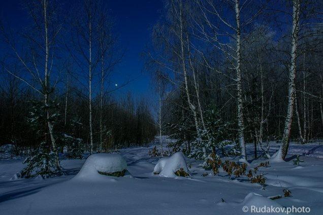 В ночном лесу