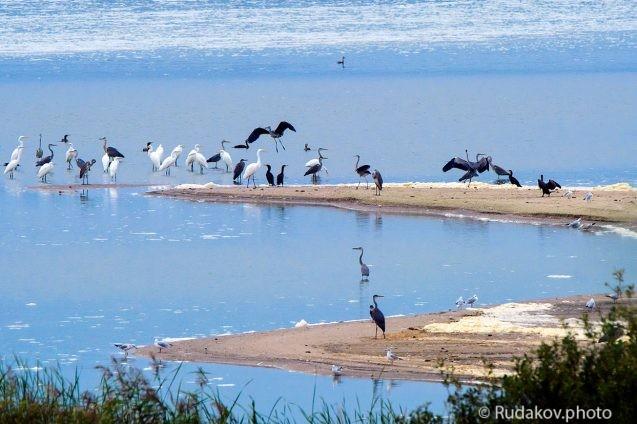 Птичий остров