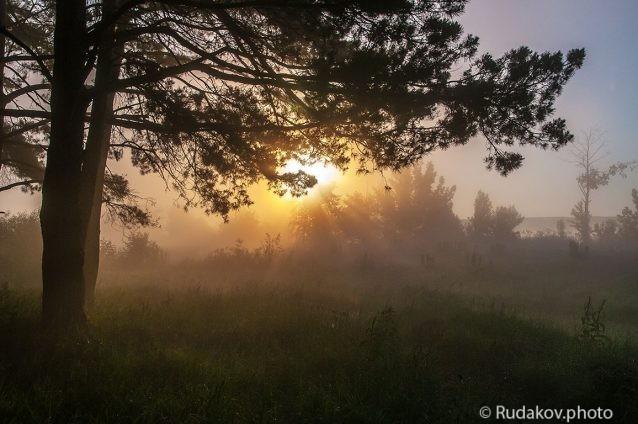 Под дымкой тумана