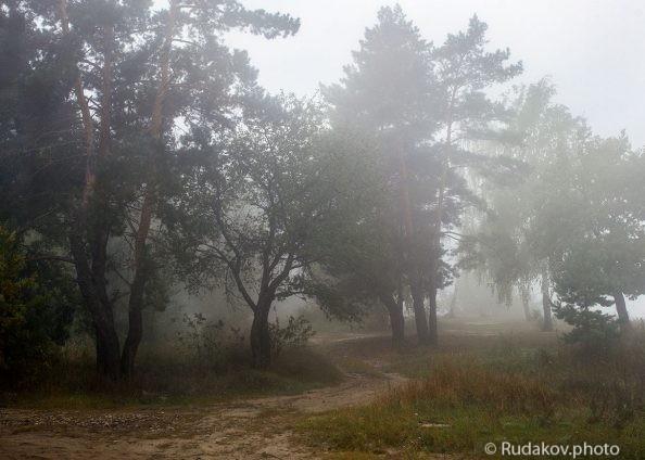 В туманной тишине