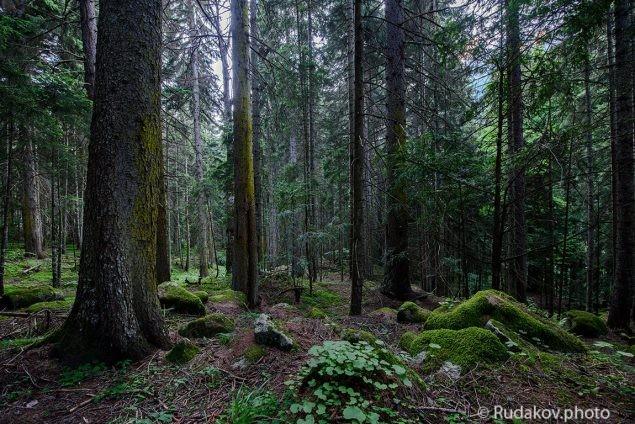 Домбайский лес