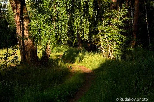 В вечернем лесу