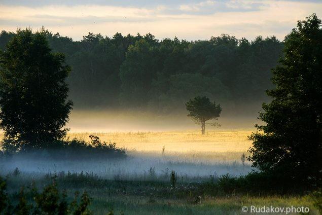 Туман на золотом лугу