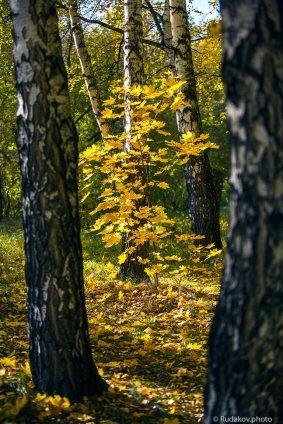 Средь берез гуляет осень