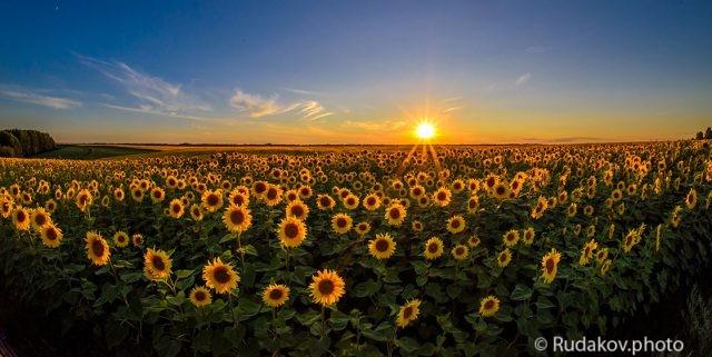 Лики солнца