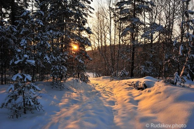 Вечером в зимнем лесу