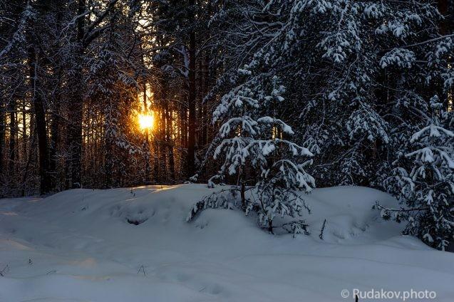 Поздний вечер в зимнем лесу