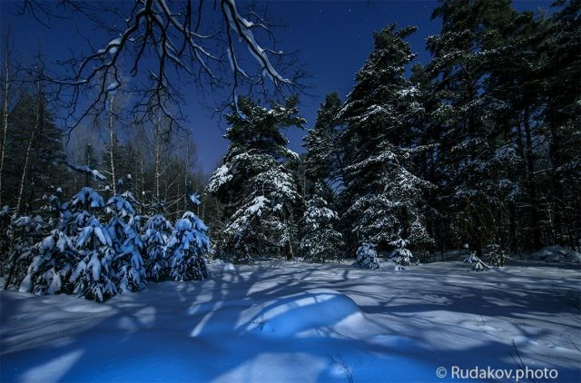 В сказочном зимнем лесу
