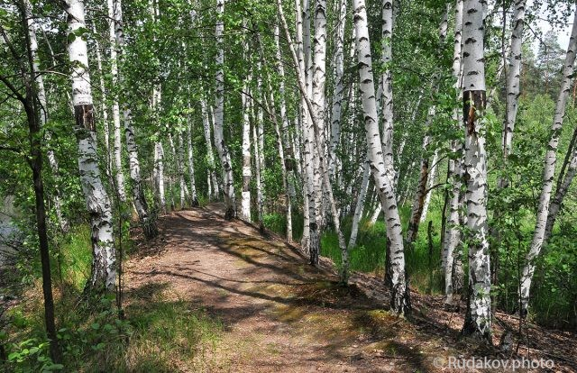 В Перкинском лесу