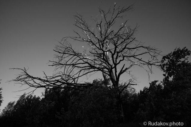 Вечер растущей луны