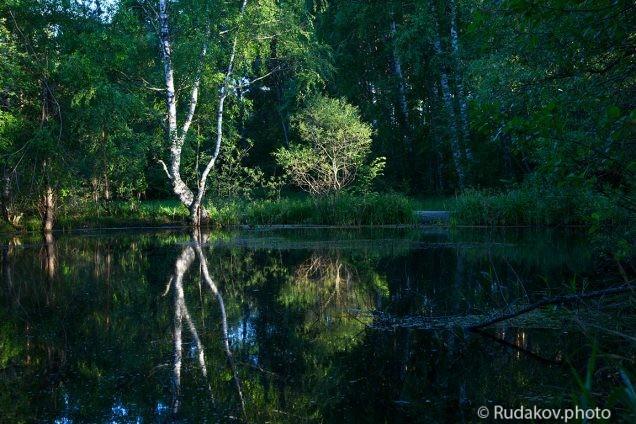 У лесного озера