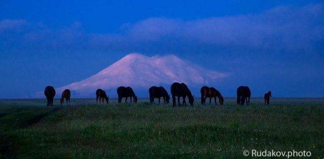 Ходят кони у Эльбруса