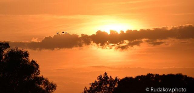 Лебеди летящие к солнцу