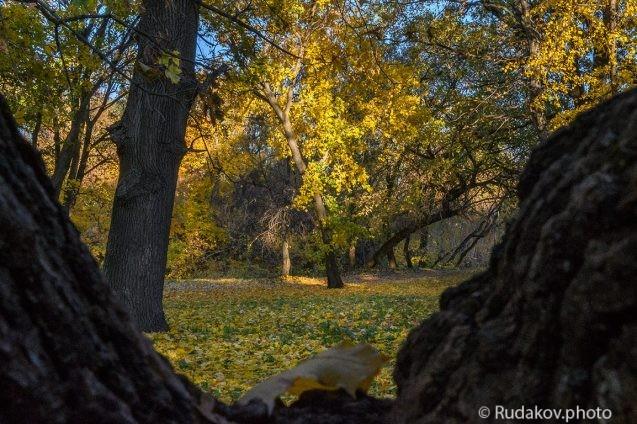 Осень на распадке