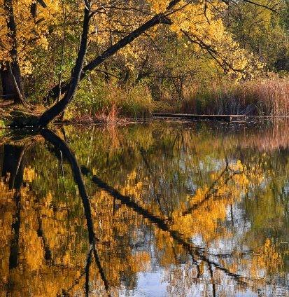 Тамбовская осень