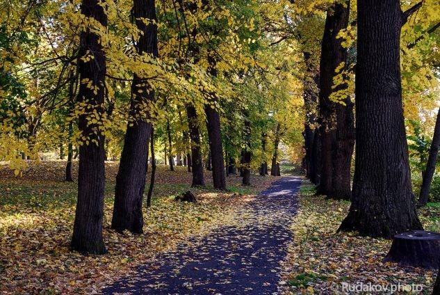 Тропинками осени. Осень в парке бывшей усадьбы Кариан-Загряжское.