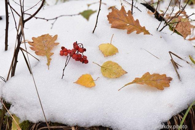 Опавшая осень