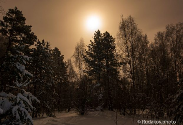 имний лес в ночь полной луны
