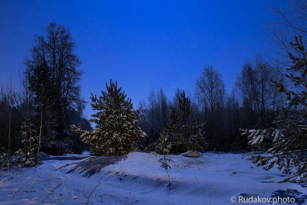Зимний лес в ночь полной луны