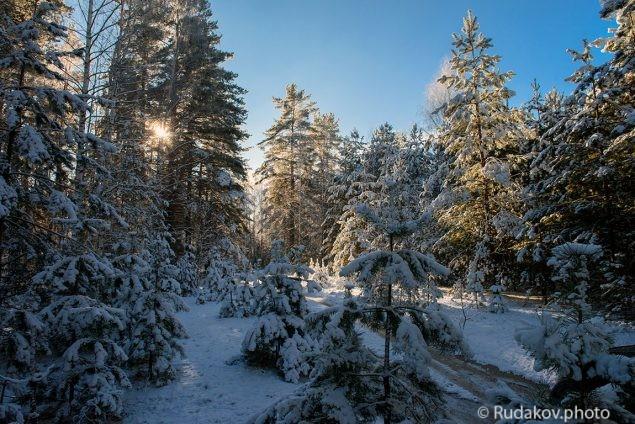 Зимний лес. Притамбовье.