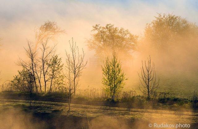 Цвет тумана