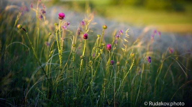 Среди трав