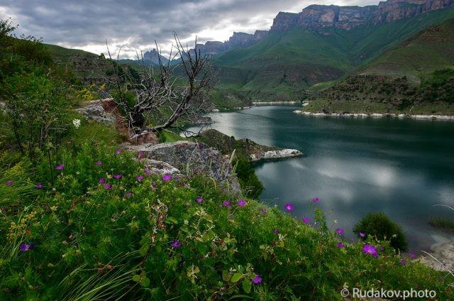 Цветы озера Гижгит