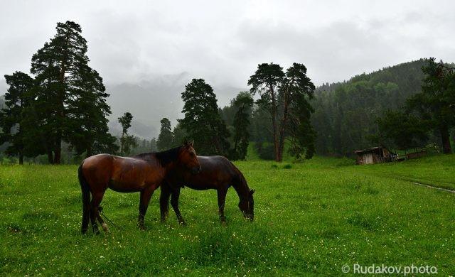 Лошади под дождем. Архыз