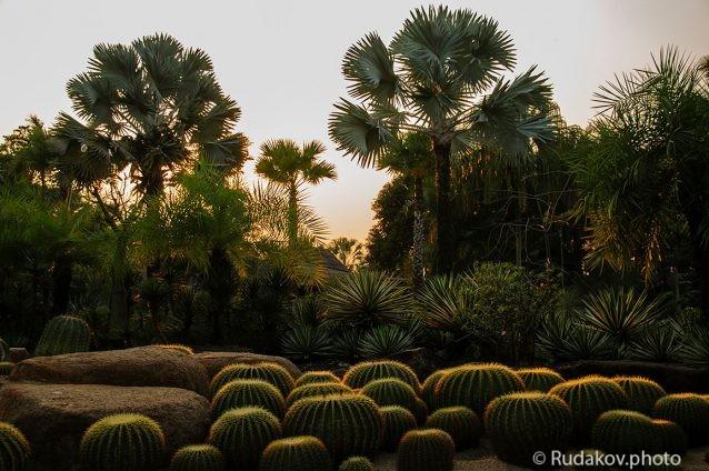Вечер в парке Нонг Нуч