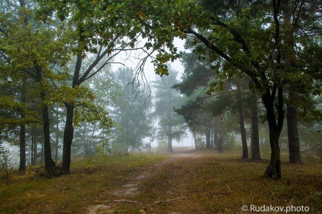 Тропинка в туман