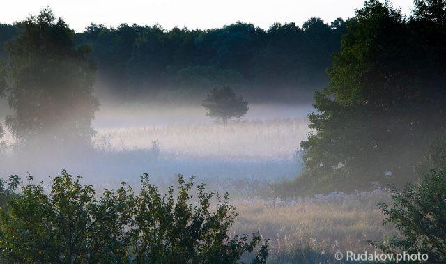 Луг в тумане
