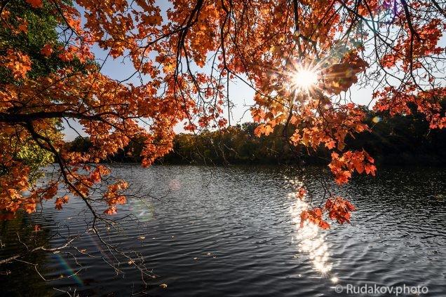 Солнце с кленами